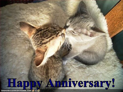 Happy Anniversary! - LOLcats from IcanHasCheezburger.com