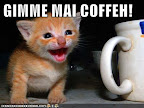 GIMME MAI COFFEH! - LOLcats from IcanHasCheezburger.com