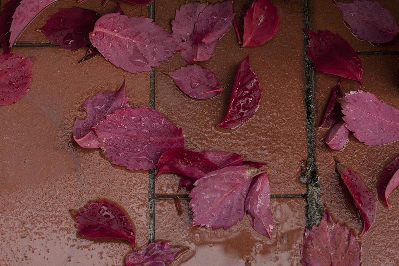colori d'autunno di gabrielecollini