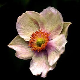 by Bjørn Bjerkhaug - Flowers Single Flower