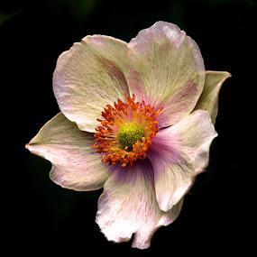 by Bjørn Bjerkhaug - Flowers Single Flower (  )