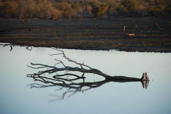 in attesa del rinoceronte di IOANAI