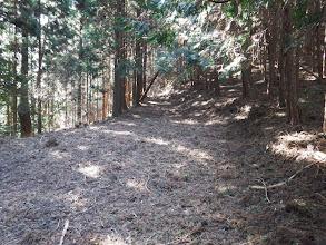 荒れているが広い林道
