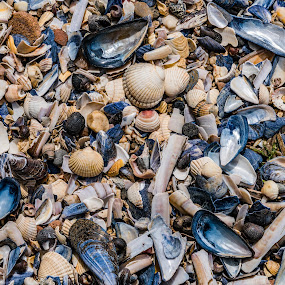 Sea Shells by Nigel Bishton - Nature Up Close Other Natural Objects