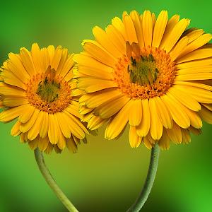 flower64.jpg