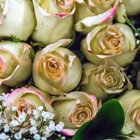 bunch of roses by Andrew Medvegy - Flowers Flower Arangements (  )