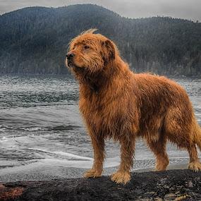 by Brenda Baird - Animals - Dogs Portraits