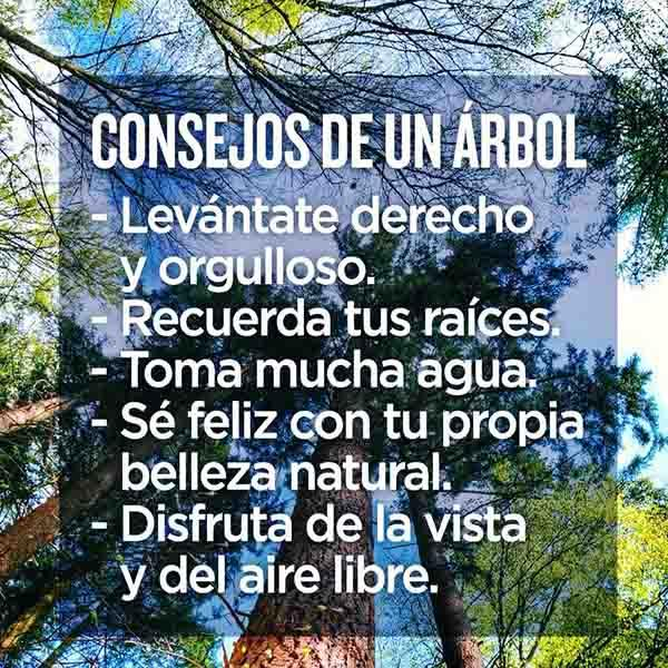 Imagenes De Frases Sabias Android Applications Appagg