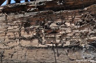 Photo: Termite dropping on the 2x10 garage joist.