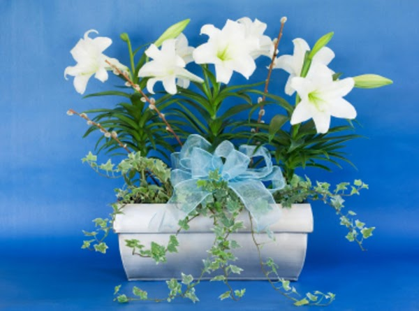 Taking Care of Your Easter Lily To keep your Easter Lilies fresh and fragrant...