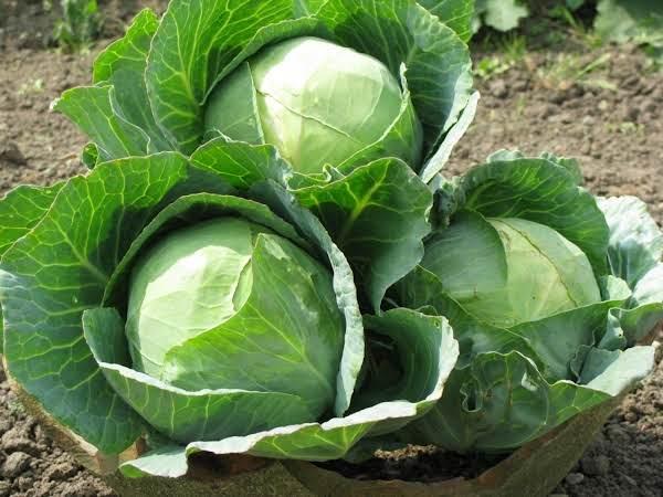 Pam's Fruity Coleslaw Salad