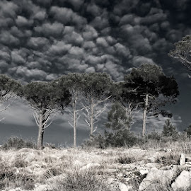 by Boris Buric - Black & White Landscapes