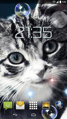 android Cute Cats HD Live Wallpaper Screenshot 3