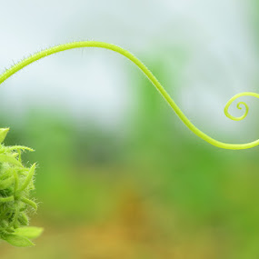 Weed by Muntazeri Abdi - Nature Up Close Gardens & Produce