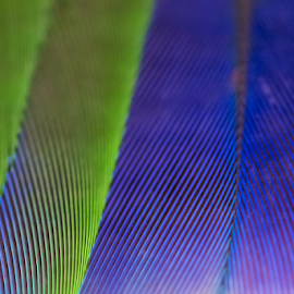 by Keith Sutherland - Abstract Macro ( macro, purple, pattern, green, feathers )