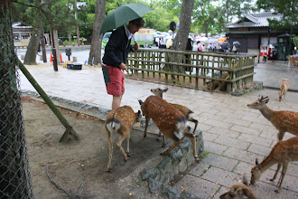 Photo: Feeding the deer that are every where on the temple grounds