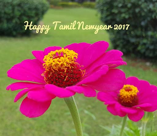 Tamil New year 2017 Wallpapers 0.1 screenshots 2