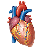 Cardiology Mnemonics, History Taking & Examination