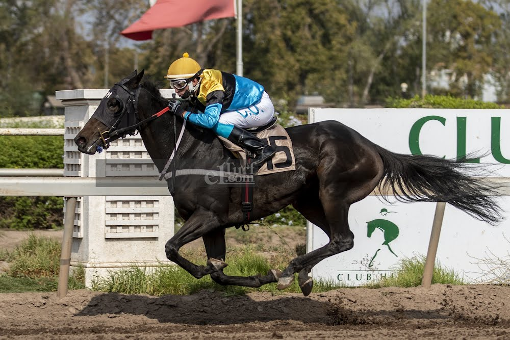 Corre Cote (Seeking The Dia) brilla en Handicap (1000m-Arena-CHS). - Staff ElTurf.com