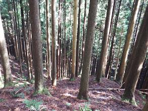 尾根沿いは諦め、左の植林帯を降りる