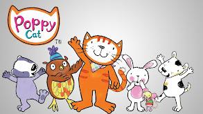 Poppy Cat thumbnail