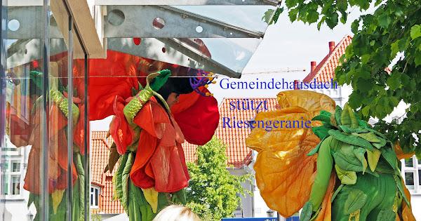 Gemeindehausdach stützt Riesengeranie