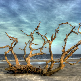 Driftwood Grove by Greg Mimbs - Nature Up Close Trees & Bushes ( water, clouds, sand, erosion, waves, driftwood beach, georgia, ocean, live oaks, barrier island, sky, trees, jekyll island,  )