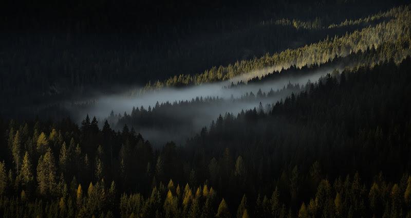 I miei boschi di Salvatore Massaiu
