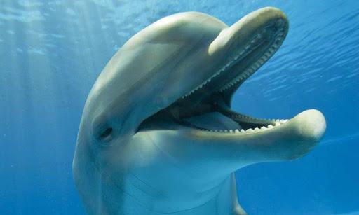 Dolphins Live Wallpaper  screenshots 4