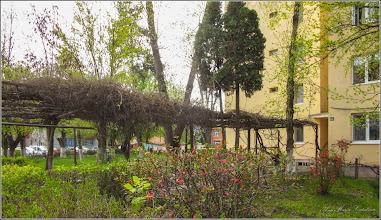 Photo: Turda - Aleea Plopilor  - 2019.04.15