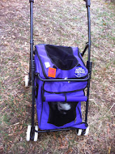 Photo: Small dog in stroller