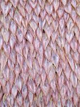 Photo: dried squid