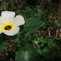 Flores do Nordeste Brasileiro