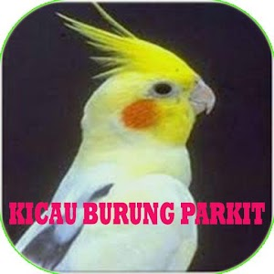 Download Kicau Burung Falk Parkit Apk Latest Version 1 0 For