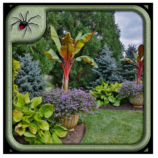 Tropical Garden Plants Design Ideas Apps Bei Google Play