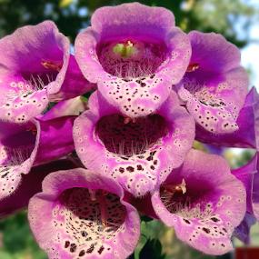 All Blooming...... by Gautam Tarafder - Flowers Flower Gardens (  )