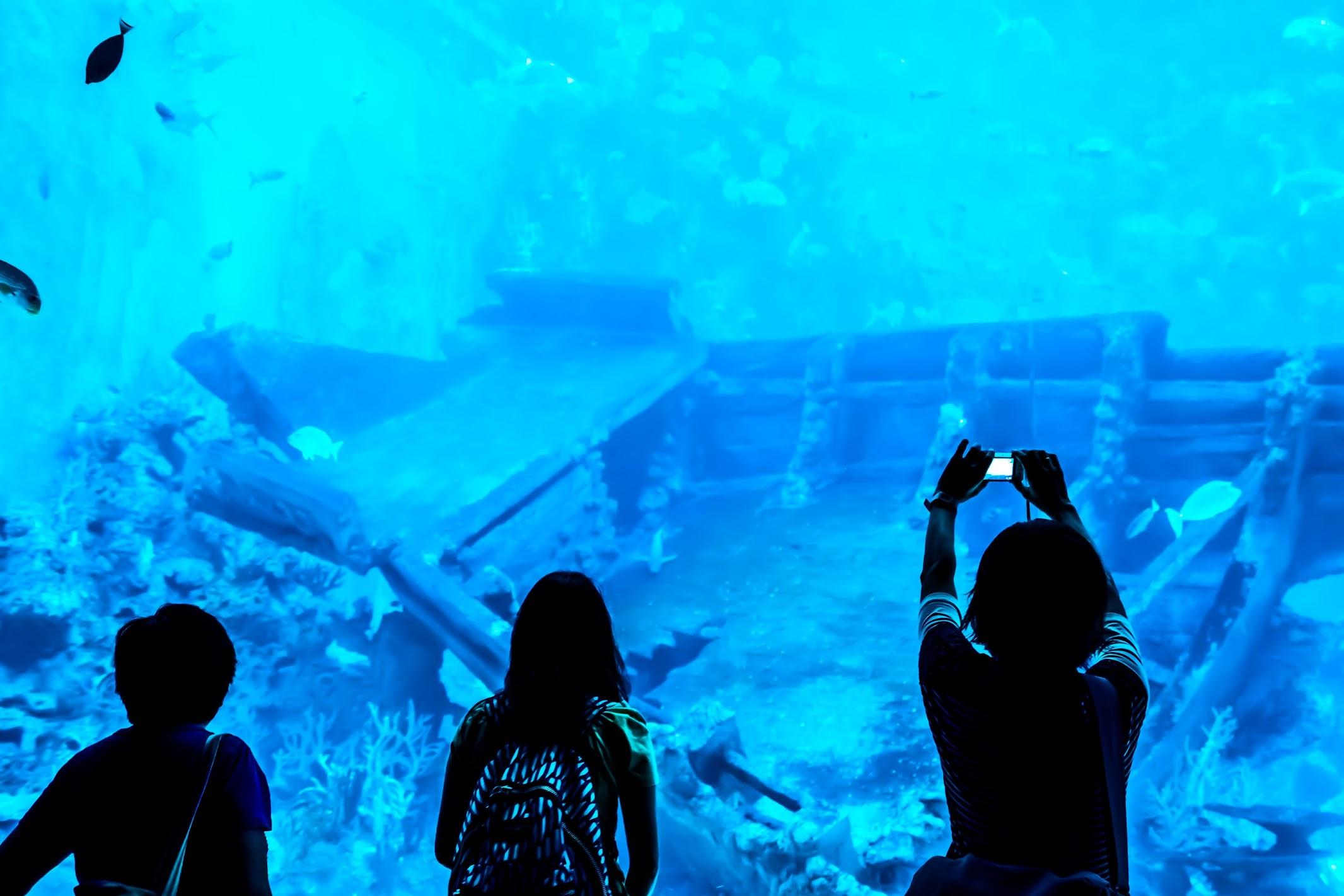 シンガポール セントーサ島 シー・アクアリウム 難破船2
