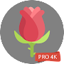 Rose Wallpapers 4K Rose Backgrounds временно бесплатно