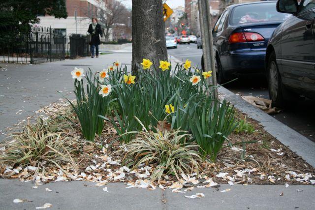 flowers22nd street.jpg