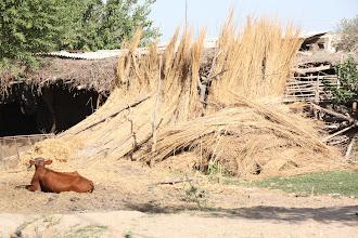 Photo: Day 161 - Farm in Village