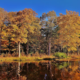 Redington Lake Autumn Scene 2018 by Matthew Beziat - Landscapes Waterscapes ( fall, maryland, redington lake, prince george's county, lake redington, autumn, patuxent research refuge, patuxent research refuge south tract,  )
