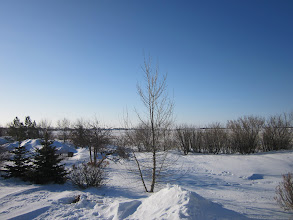 Photo: The garden view - April 1