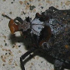 Bizarre Lanternfly