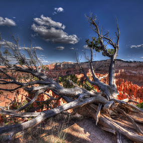 Beautiful Bryce! by Kent Moody - Landscapes Deserts ( desert, tree, bryce, canyon, hoodoos )
