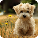 Poodle Dog Live Wallpaper icon