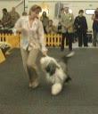 Photo: Ex 3rd, EURO DOG SHOW BRATISLAVA 2003