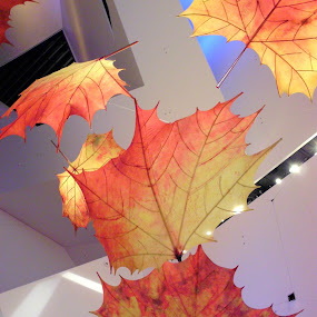Fall Leaves by Ann Marie - Artistic Objects Other Objects ( ceiling, fall, leaves, nature, autumn, abscission, folliage, leaf )
