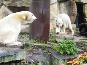 Photo: Hm, sollte Knut bei Gianna vorbeischauen ?