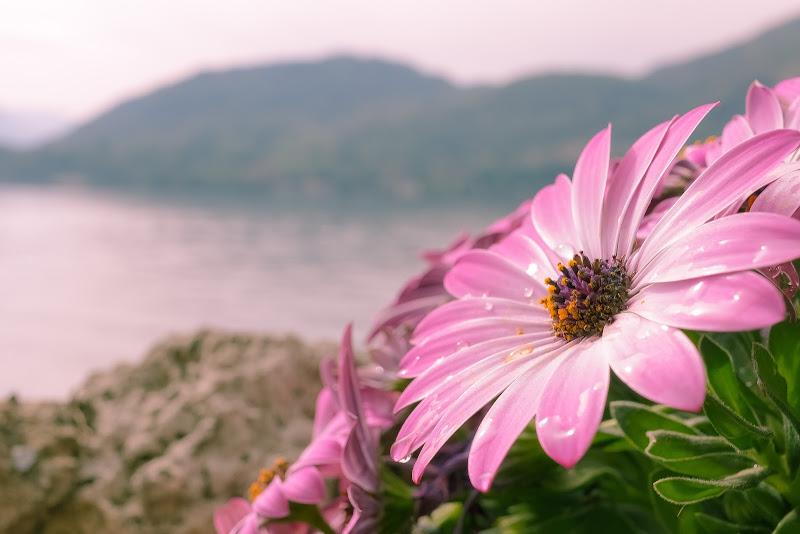 Il risveglio della Primavera di DB_Photography