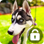 Husky Lock Screen Wallpaper Password Pin